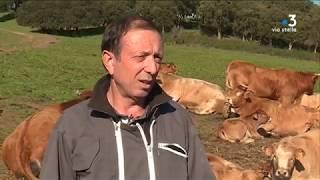 Travail avec la nature et bien-être animal : un élevage en agroécologie aux portes d'Ajaccio