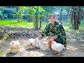 Chicken Cooking in Village by Girl & Mom | Village Food Factory & Life