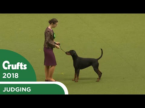 International Junior Handling Competition - Final Judging | Crufts 2018