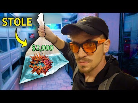 BREAKING INTO an AQUARIUM 💰 - (Stole a $2,000 Anemone)