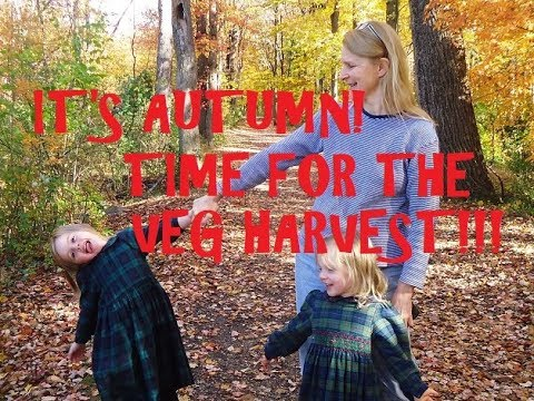 Vegetable Garden Harvest!  Save Money on Groceries by Growing your own Organic Veg!