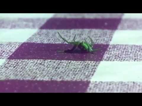 Alien Arachnoide übt Ausdruckstanz