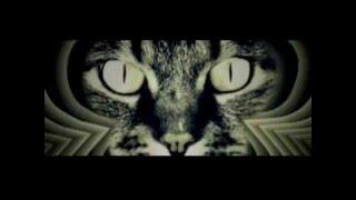 Тeppитopия зaблyждeний / Кошки (2013)