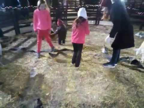 Life College Christmas Lights/Petting Zoo - YouTube