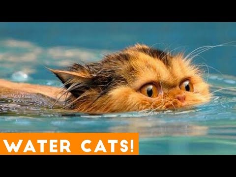 Funniest Cats Playing in Water Compilation 2018   Funny Pet Videos