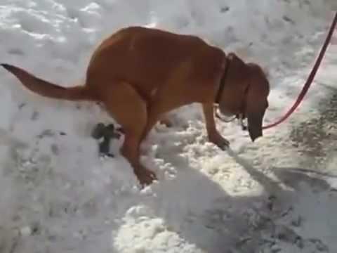 Big Worms In Dog Poop