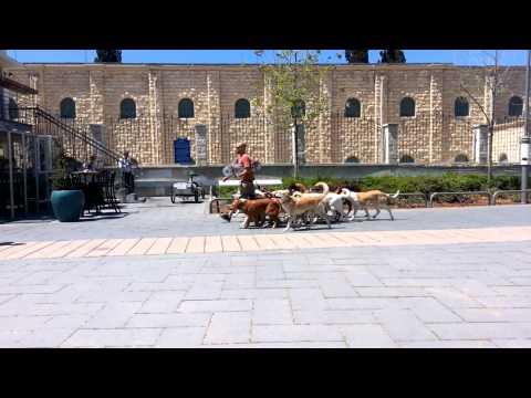 Jerusalem dog walker