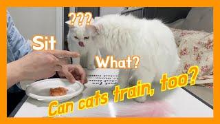 [ENG] 고양이도 훈…