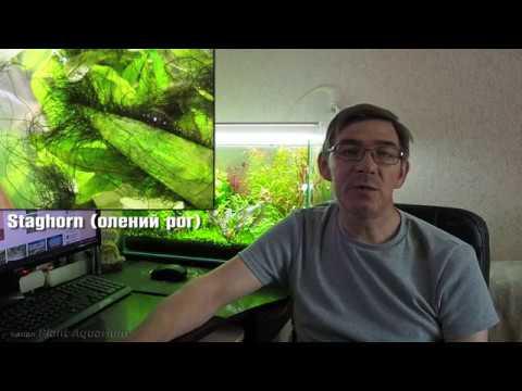 Как бороться с водорослями в аквариуме