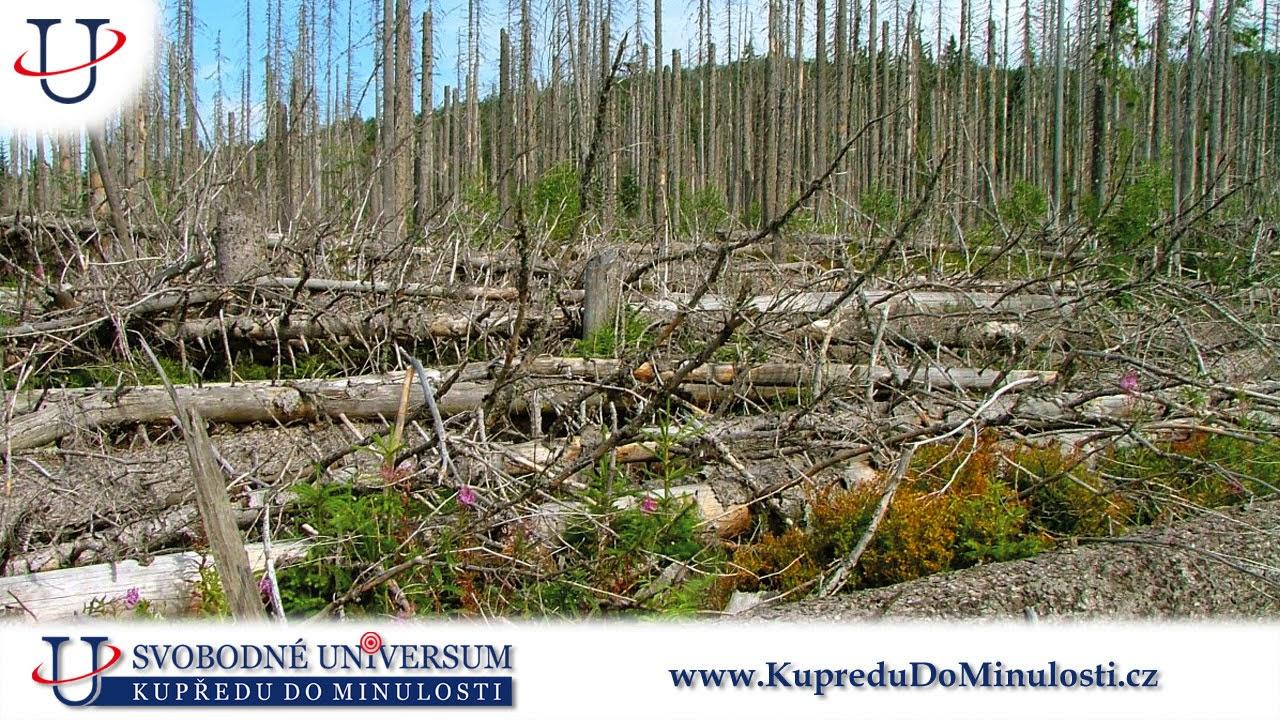 Jan Štrobl 1. díl: Stav lesů v České republice je katastrofální