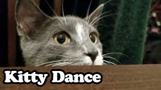 Cutest Kitty Dance Ever