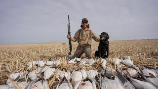 My Last Snow Goose Hunt of the Season with a Special Dog.. (EPIC)
