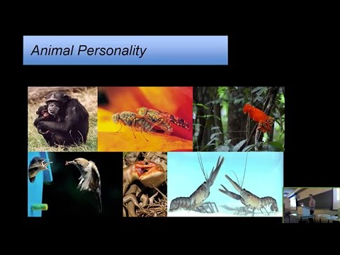 Personality plasticity and intraindividual variability: The complexities of animal behavior