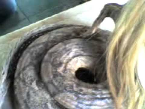 Femme serpent du gabon