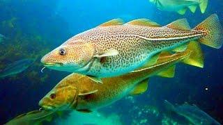 СОННИК - Рыба