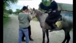 в Осетии даже кони сумплекс умеют делать