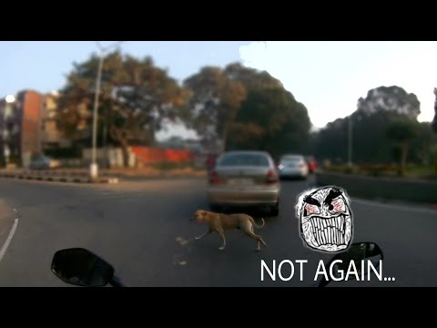 V-LoG | Daily Motivation | distributing Happiness | Night Ride | Chandigarh | Dog On Road just safe