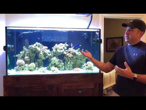Ultimate 120 Reef Tank Update #3! Big Changes & Growth for the SPS!