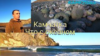 Что произошло на Камчатке!Загрязнение,экологическая катастрофа!Как можно отравить океан!