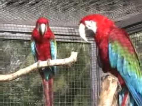wilhelma zoo stuttgard - Stoccarda