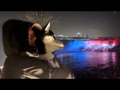 Huskies See Christmas At Niagara Falls At Night In Canada