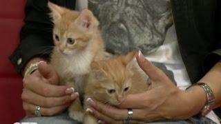 Знакомство с питомцами: очаровательные котята ищут хозяев (19.07.16)