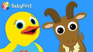 BabyFirstTV: Tillie Knock Knock Goat: Learn Animals For Toddlers
