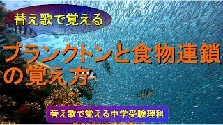 植物プランクトン、動物プランクトンなどのプランクトン、水中の食物連...
