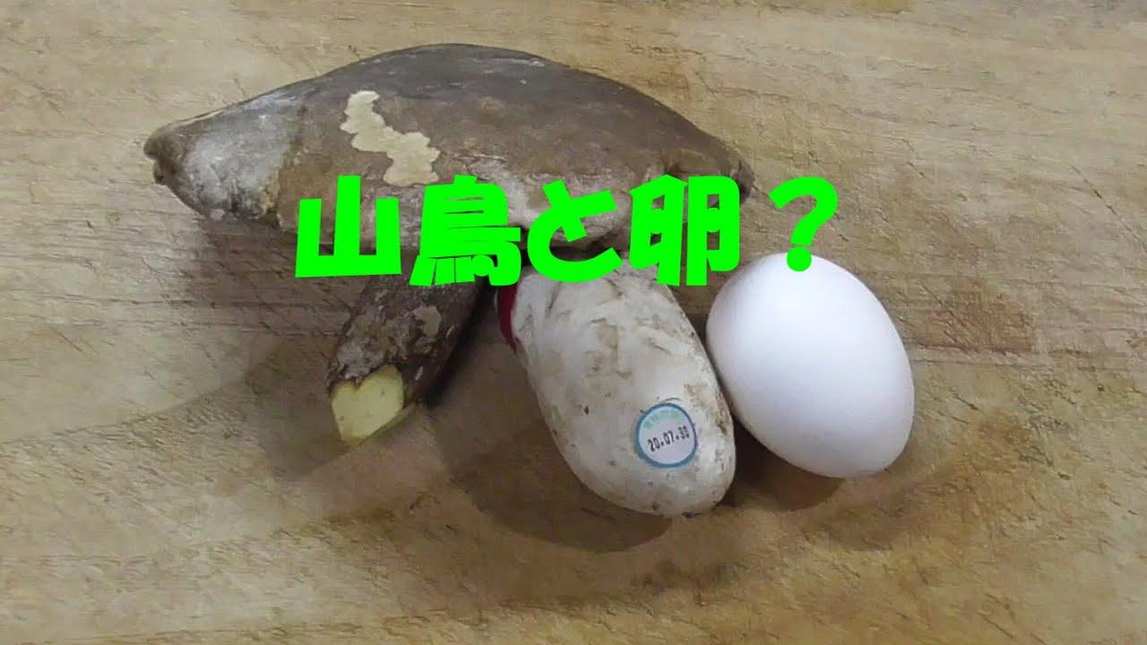 【夏のキノコ狩り】ヤマドリタケモドキとタマゴタケを冷凍してからホイル焼きにしてみた