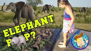 Stepping in Elephant MUD!!! $10 Wager (FUNnel Vision Vlog)