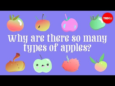 Why are there so many types of apples? - Theresa Doud
