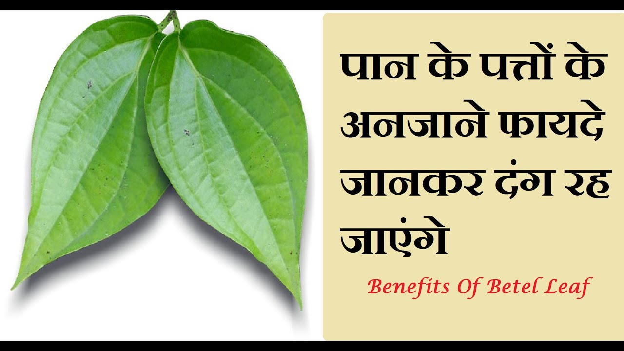 supply chain of betel leaf Get help on 【 supply chain of betel leaf essay 】 on graduateway huge assortment of free essays & assignments the best writers.