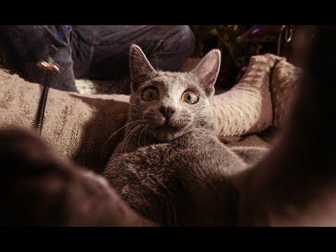 MiłyPan - Ale Kot (Official Video)