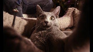 Смотреть клип Miłypan - Ale Kot