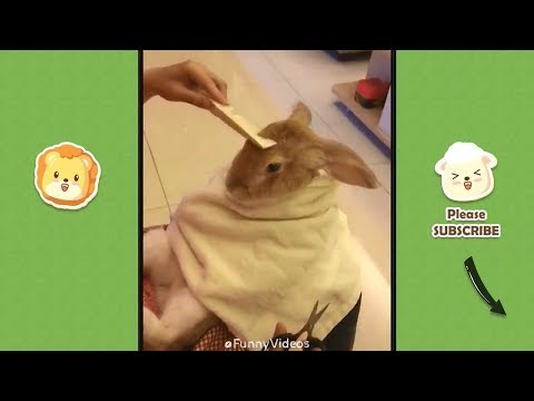 Funny Videos | Funny & Cute Cats and Dogs, Funny Pet Animals Video #26