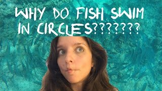 Why do fish swim in circles?