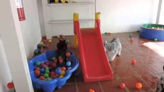 Yamipets Daar Krijgt Jouw Hond Energie Van