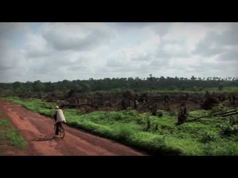 LVIA in Guinea Bissau: RISO DI VITA
