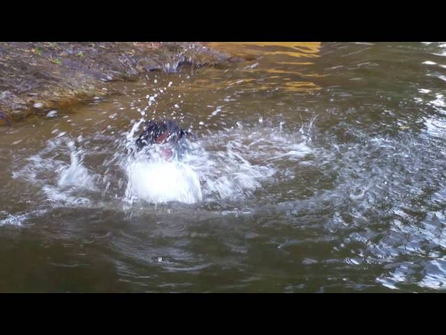 Ninja det stora sjöodjuret