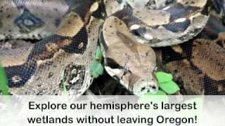 Your Guide to Visiting the Oregon Coast Aquarium