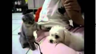 cats vs dogs funny youtube make4fun com f5049