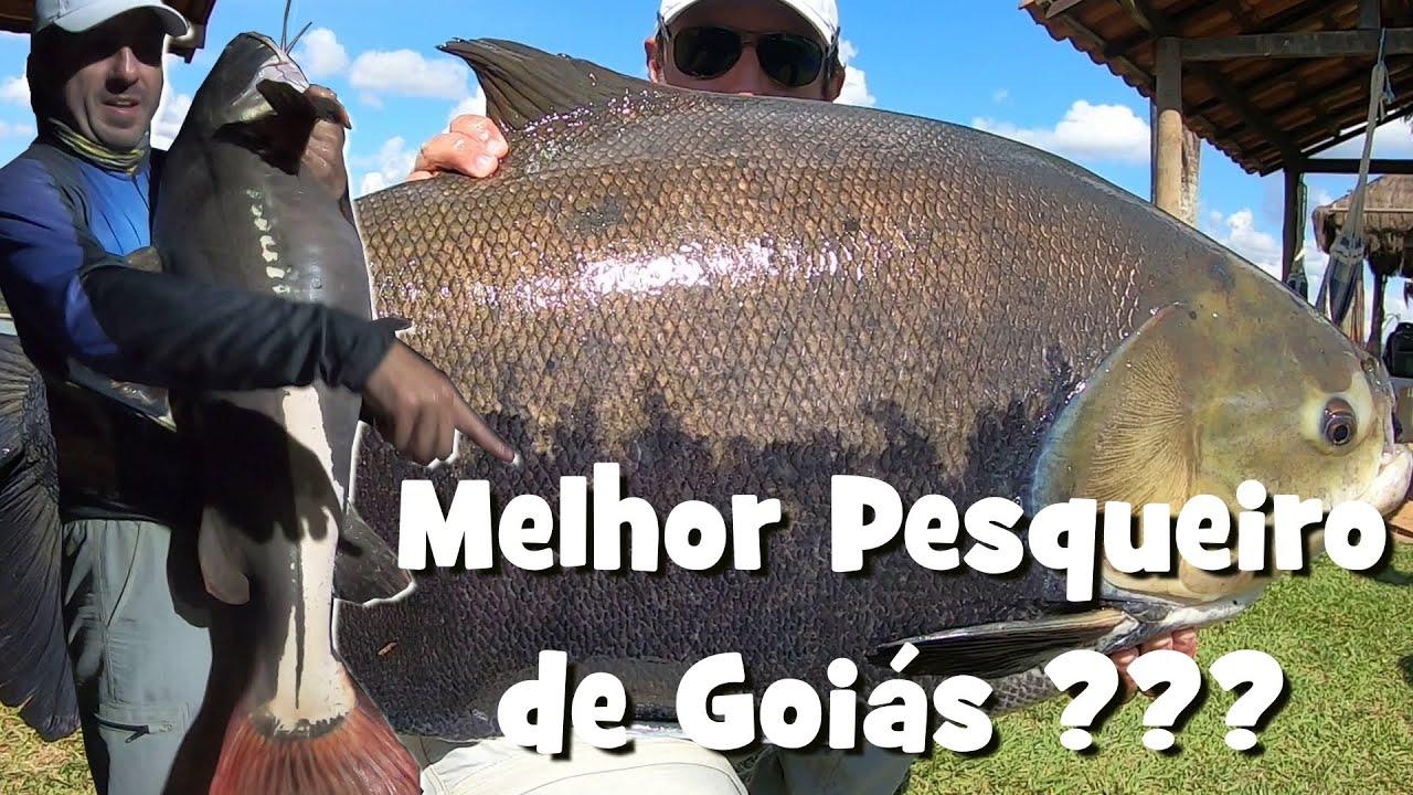 O Melhor Pesqueiro de Goiás? Só Peixes Gigantes no Programa Fishingtur na TV 675 - Point da Pesca
