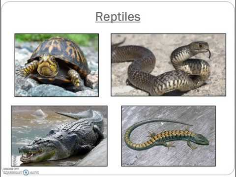 The Animal Kingdom: Vertebrates and Invertebrates