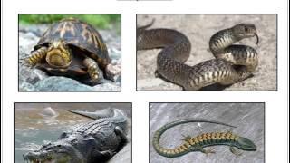 The Animal Kingdom: Vertebrates and Invertebrates