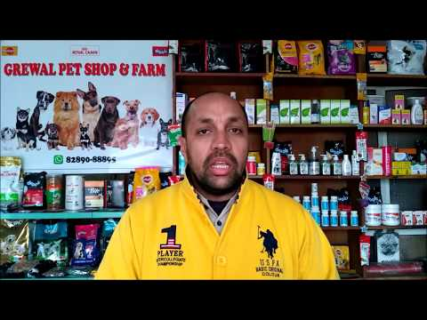 Pet Care - Dog Vaccination - Bhola Shola