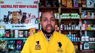 Pet Care - Dog Vaccination - Bhola Shola