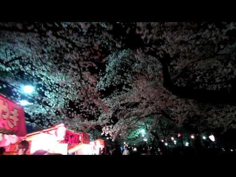 """2012.04.09 Omiya Park """"SAKURA〟 Saitama City Japan"""
