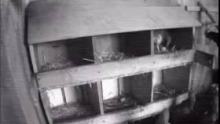 Куры клюют яйца(Курицы клюют яйца., 2017-02-03T08:15:57.000Z)