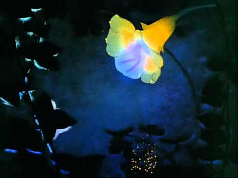 Fantasia - Dance Of The Sugarplum Fairy (Tchaikovsky) - Disney