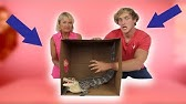 DEADLY WHAT'S IN THE BOX CHALLENGE! **Live Animals**